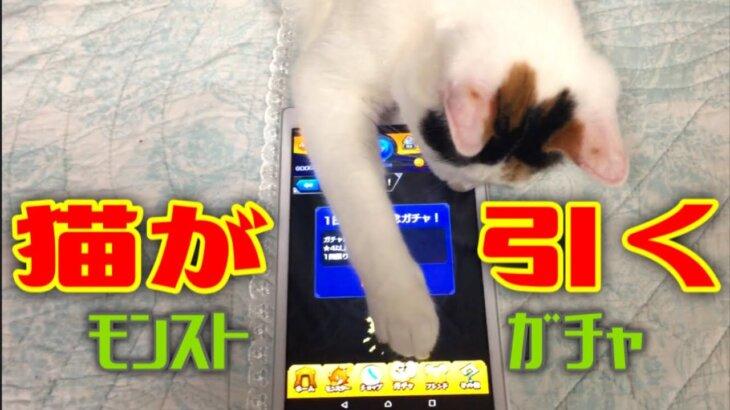 猫にガチャを引かせたい【モンスト】(三毛猫ちゃーみー)